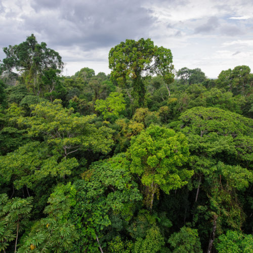 Jungle canopy in Peru