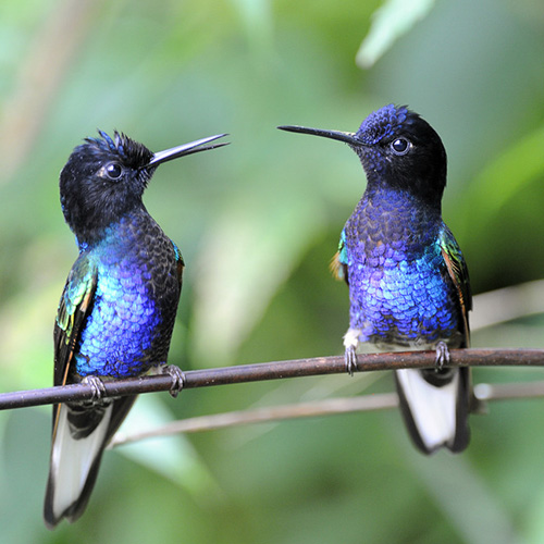 Ecuador - Mindo Hummingbirds 2