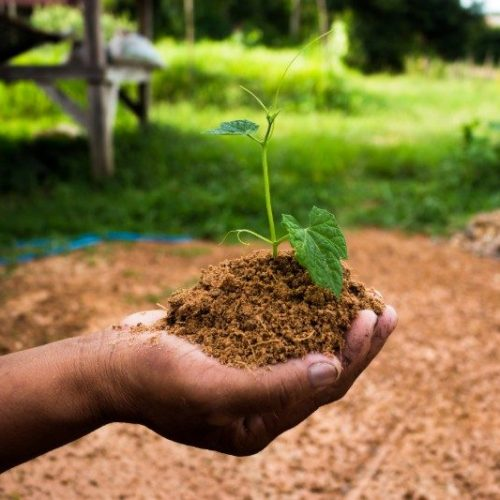 Service Learning Reforestation Project