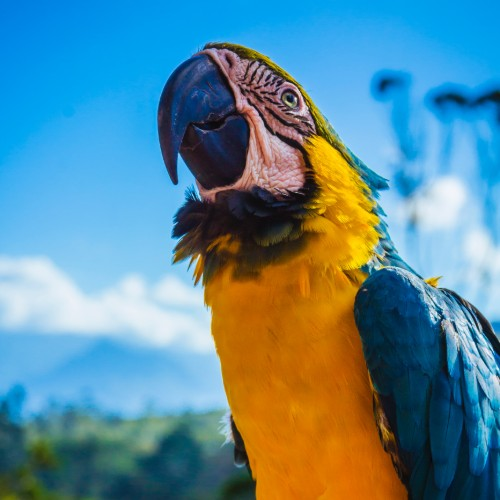 Macaw-sancturary-service-project