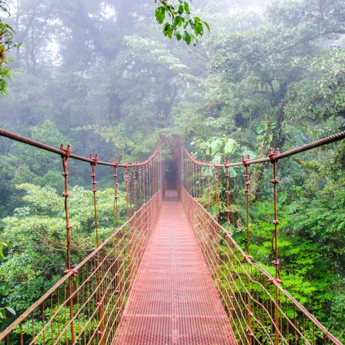 Monteverde Cloud Forest - Red Bridge